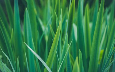 The simple health and fitness benefits of wheatgrass