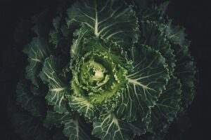 The EPIC health benefits of eating Chinese cabbage
