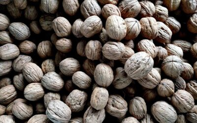 The nutritional benefits of eating Walnuts