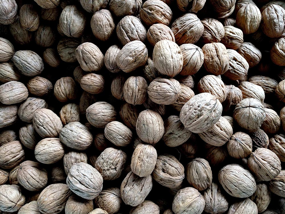 The nutritional benefits of eating Walnuts. A pile of Walnuts together