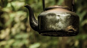 The health benefits of drinking White Tea. A kettle being held up in nature with white tea in it