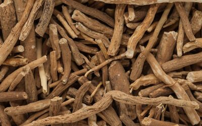 Here's why the ashwagandha root can improve fitness