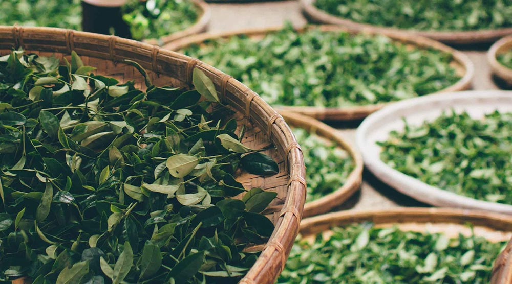Green tea, white tea, black tea what does what?