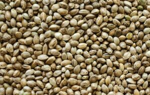 Benefits of adding a sprinkling of hemp seed to your meals. A variety of hemp seeds spread out