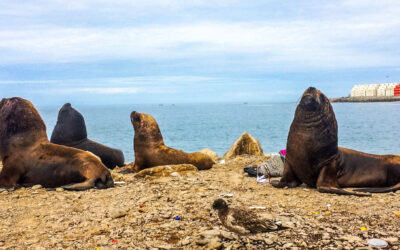 All you need to know for backpacking Iquique