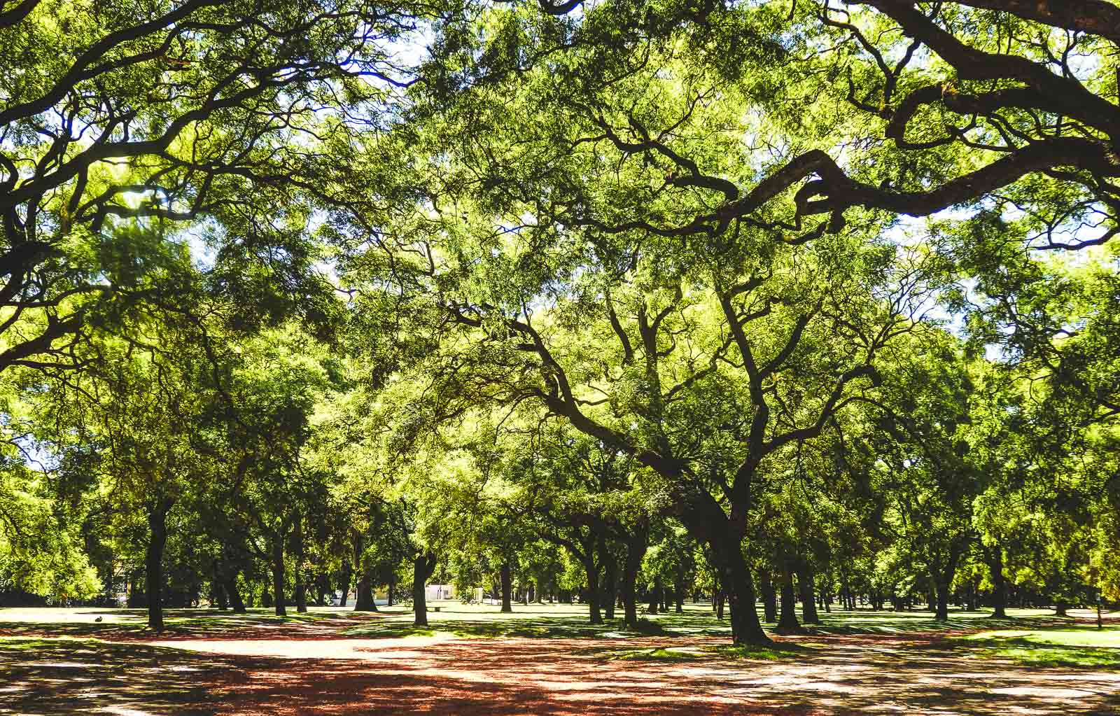 Here's why after travelling Buenos Aries I want to live there. A view of one of the many lush green parks in Buenos Aries with lots of trees, ideal for picnics
