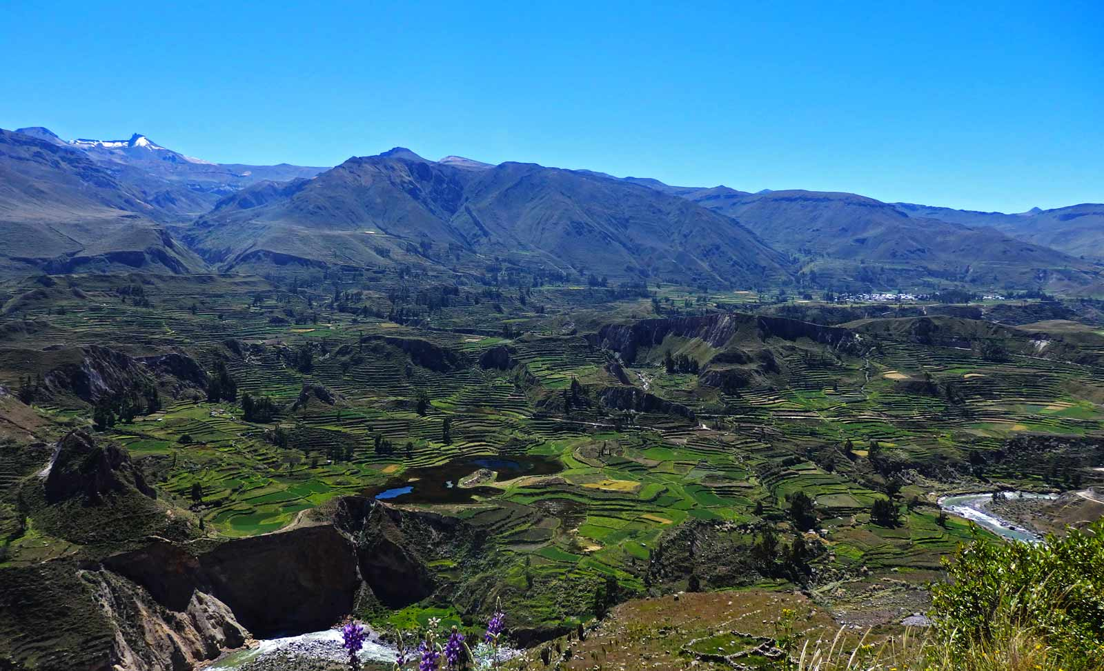 Here's why trekking Colca Canyon took my breath away. A beautiful view of fields and lush green gardens