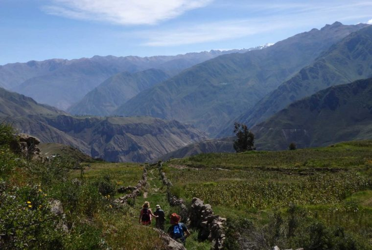 Here's why trekking Colca Canyon took my breath away. people walk off into the distance at Colca Canyon